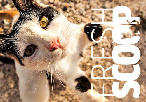 FRESH SCOOP NEWSLETTER | Morris Animal Foundation | Muse Awards