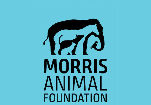 Logo Rebrand | Morris Animal Foundation | Muse Awards