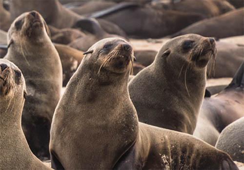 MORRIS ANIMAL FOUNDATION WEBSITE | Morris Animal Foundation | Muse Awards